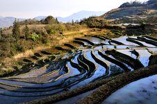 Free China Yunnan Hani Terrace View Royalty Free Stock Photography - 8603757