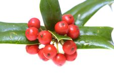 Free Ilex Close-up Royalty Free Stock Photography - 8603787