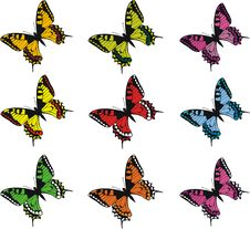 Free Collection Of Colorful  Butterflies Stock Photos - 8604263