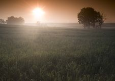 Free Foggy Sunrise Stock Photo - 8604480
