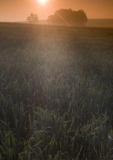 Free Foggy Sunrise Stock Photos - 8604563