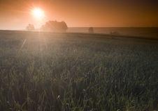 Free Foggy Sunrise Royalty Free Stock Images - 8604619