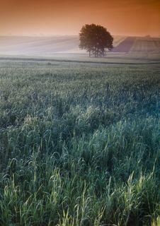 Free Foggy Sunrise Stock Image - 8604661