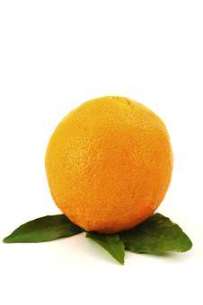 Free Orange Royalty Free Stock Photos - 8605258