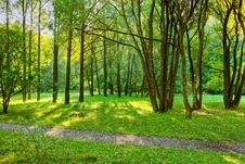 Free Morning In Forest Stock Image - 8606511
