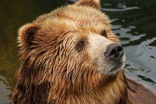 Free Bear Royalty Free Stock Photo - 8606525