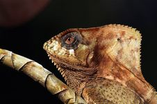 Free Small Lizard Sitting On Branch Stock Image - 8606801