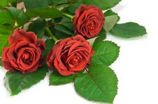 Free Red Rose Bouquet Royalty Free Stock Photos - 8607418