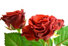 Free Red Rose Bouquet Stock Photo - 8607440