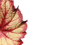 Free Leaf Royalty Free Stock Photo - 8609945
