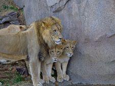 Free Carnivore, Organism, Felidae, Terrestrial Animal Stock Photos - 86005223