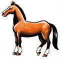 Free Brown Horse Royalty Free Stock Photography - 8614507