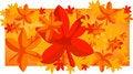 Free Autumn Leaves Stock Photos - 8615353