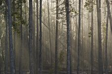 Free Sunlit Forest Stock Photography - 8610112