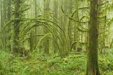 Free Moss Covered RainForest Stock Photo - 8610180
