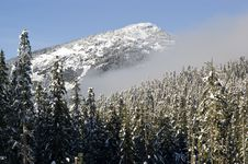Free Forested Winter Mountain Royalty Free Stock Image - 8610296