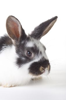 Free Spotted Bunny Portrait, Isolated Royalty Free Stock Images - 8610819
