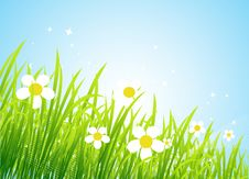 Free Spring Meadow Beautiful Stock Image - 8611301