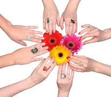 Three Flowers With Female Hands Royalty Free Stock Photos