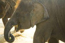 Free Elephant Stock Photography - 8612892