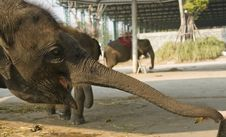 Free Elephant Stock Photography - 8613012