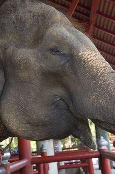 Free Elephant Stock Image - 8613091