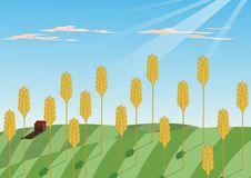 Free Grain Growin Stock Image - 8613471