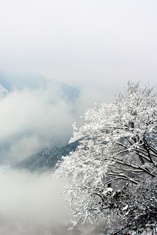 Free Snow Covered Tree Royalty Free Stock Photography - 8614187
