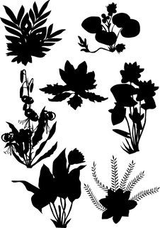 Free Lily Ornamental Silhouette Stock Image - 8614501