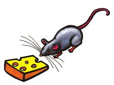 Grey Mouse Stock Photo