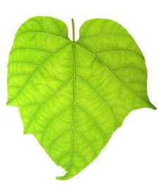 Free Leaf Stock Photography - 8614982