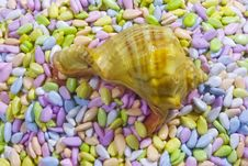 Free Seashell And Multicolor Glazed Seeds Stock Photography - 8615502