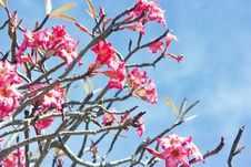 Free Flowers And Sky As Background Stock Photo - 8618170