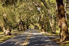 Free Car Entering Oak Tree  Lane Royalty Free Stock Photos - 8619708