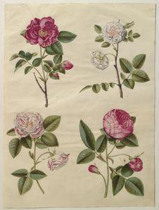 Free Johannes Simon Holtzbecker &x28;1610/20-1671&x29; &x22;Gottorfer Codex&x22;, 1649-59., KKSgb2948-24 Royalty Free Stock Images - 86177139