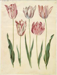Free Johannes Simon Holtzbecker &x28;1610/20-1671&x29; &x22;Gottorfer Codex&x22;, 1649-59., KKSgb2947-55 Stock Photography - 86177242