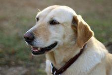 Free Dog, Carnivore, Collar, Plant Royalty Free Stock Photos - 86180118