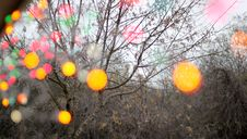 Free Christmas Lights Out Of Focus Royalty Free Stock Images - 86180159