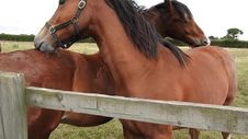 Free Horses Grooming Each Other Stock Photos - 86180163