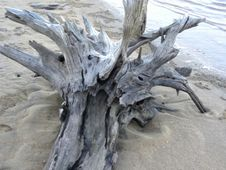 Free Driftwood Royalty Free Stock Images - 86180189