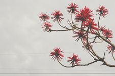 Free Red Flowers Bloomed Front Brown Tree Branch Stock Photo - 86181870