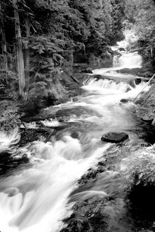 Free Grayscale Photography Of Running River Surrounded Forest During Daytime Stock Images - 86181874