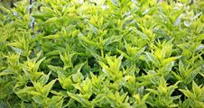 Free Close Up Photo Of Green Leafed Plants Royalty Free Stock Image - 86182276