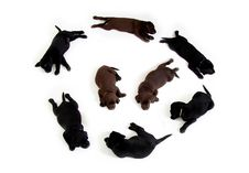 Free Black And Brown Labrador Puppies In A Circle Formation With 2 In The Middle Stock Photo - 86182620