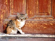 Free Domestic Cat By Wooden Door Stock Photography - 86184152