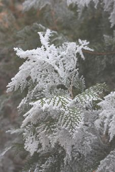 Free Green Leaf Trees Covered With Snow Stock Photography - 86186752