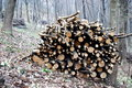 Free Stacked Logs Royalty Free Stock Photo - 8627615