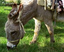 Free Donkey Royalty Free Stock Images - 8620269