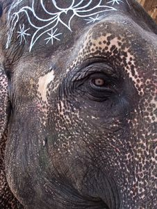 Free Painted Elephant S Face Royalty Free Stock Photography - 8622407
