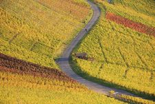 Colorful Autumn Vineyard Royalty Free Stock Images